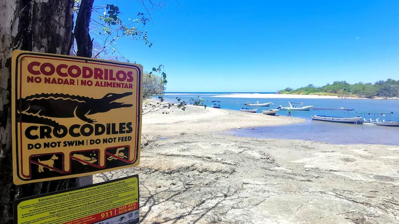 costa-rica-maik-becker-cocodrilos